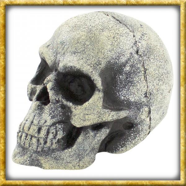 LARP Wurfschädel Knochen